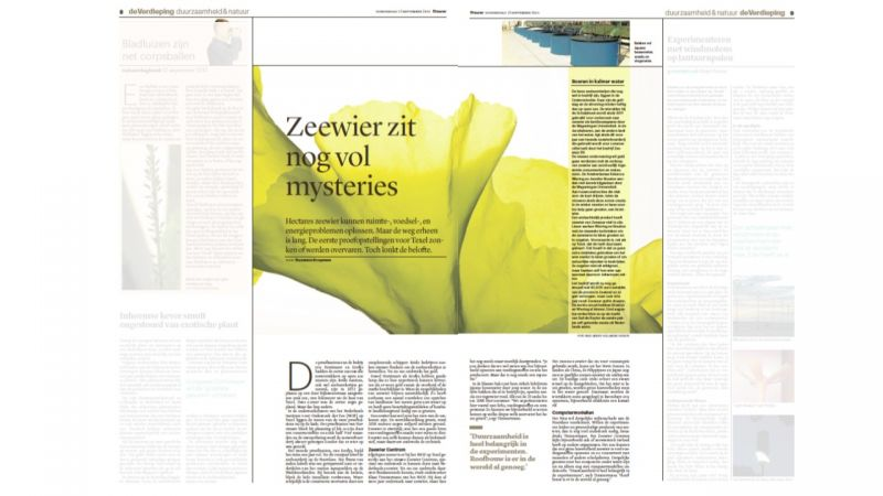 Trouw over Zeewier